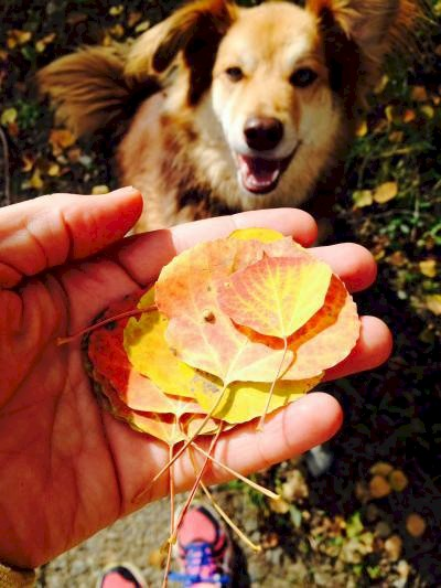Collecting leaves with Visit Telluride office doy Remy.