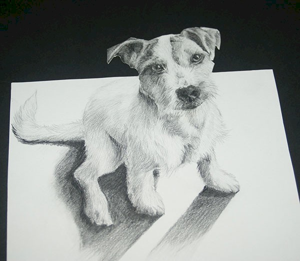 Pet Portrait Drawing Ah Haa School Art