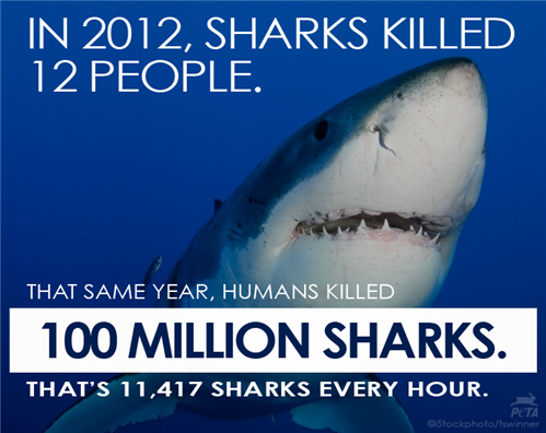 6180.Shark Deaths Fact Post PETA